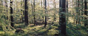 Schiffenberger Wald im Herbst